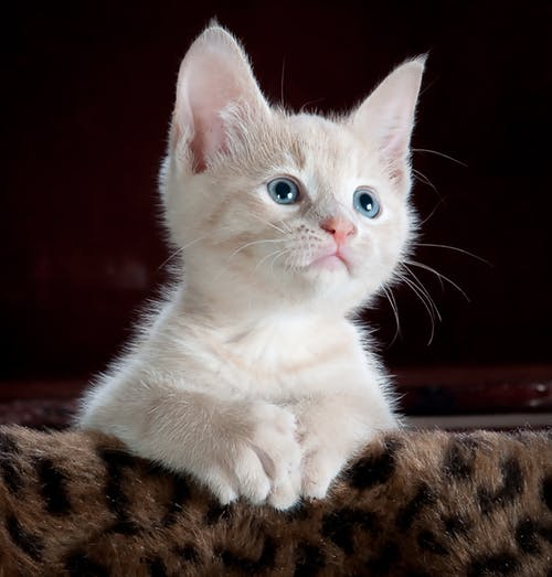 Kittens are so cute.